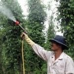 Cách pha trộn thuốc bảo vệ thực vật