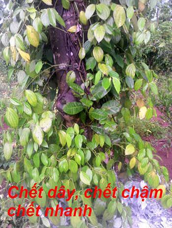 chet-nahnh-chet-cham