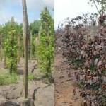 Đối phó với tình hình khô hạn kéo dài (video)