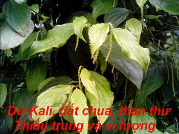 du-Kali