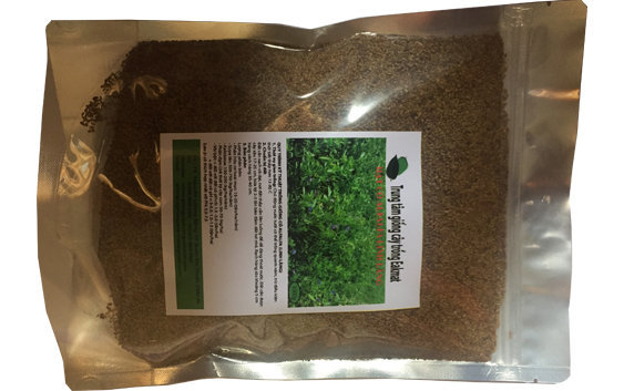 Hạt giống cỏ ubon paspalum chịu ngập úng