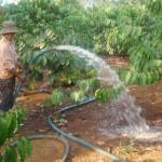 Kỹ thuật tưới nước cho cây cà phê