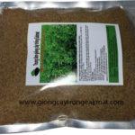 Hạt giống cỏ Alfalfalinh lăng