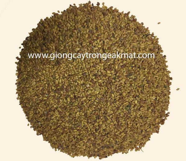 hat-giong-co-alfalfa-linh-lang (2)