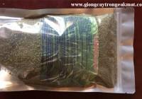 Hạt giống cỏ sả Ghine Mombasa (Ghi Nê)