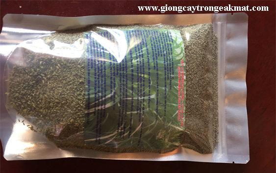 hat-giong-co-sa-ghine-mombasa-0.5kg