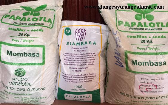 hat-giong-co-sa-ghine-mombasa-10-20-kg