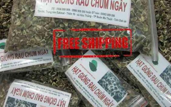 Bao bì sản phẩm hạt chùm ngây