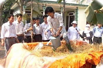 Kỹ thuật ủ rơm làm thức ăn cho gia súc
