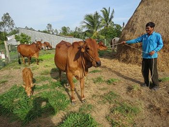 Thức ăn bổ sung tại chuồng cho bò