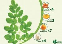 Lá chùm ngây bổ dưỡng tốt cho sức khỏe
