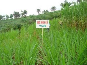 Mô hình trồng cỏ VA06