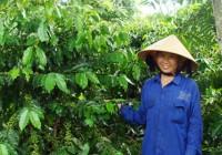Loại phân bón nào phù hợp với cây trồng ở Tây Nguyên?