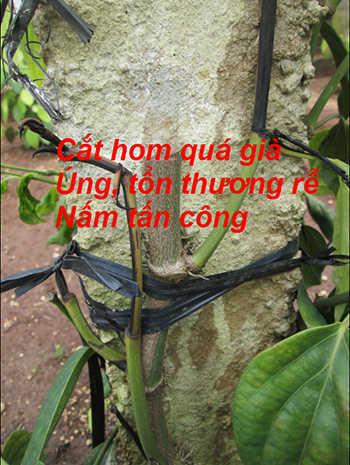 ton-thuong-re-nam-tan-cong
