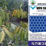 Xử lý tuyến trùng hại cà phê bằng ViFu-Super 5GR